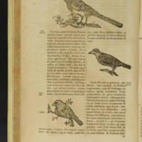 Arca Noe, Page_90_Illustrations.jpg