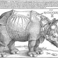 722px-Dürer_rhino_full.png