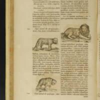 Arca Noe, Page_60_Illustrations.jpg