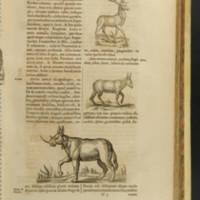 Arca Noe, Page_61_Illustrations.jpg