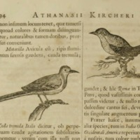 Birds on Page 94 of Arca Noe
