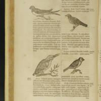 Arca Noe, Page_92_Illustrations.jpg
