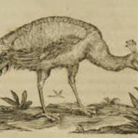 peacock image.jpg
