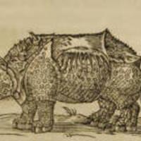 Rhinocerotem (Rhinoceros)