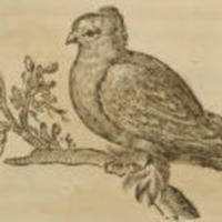 Columba (Dove)