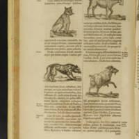Arca Noë, Page 62