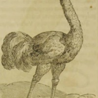 Arca Noe, Page _78_ Illustration.jpg
